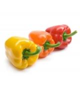 Πιπεριές Για Γεμισμα  Πολυχρωμες ανά 500 gr *